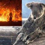 【こんなにも多くが..】オーストラリアの火事で犠牲になっている動物の数が人口を超えている