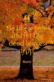 Be Like A Tree And Let The Dead Leaves Drop. ~ Rumi  #ThoughtForTheDay #inspiringquote #believeinyourself #FamilyTrain  #starfishclub  #GoldenHearts #JoyTrain  #ThinkBIGSundayWithMarsha<br>http://pic.twitter.com/8VdFPnUvIs