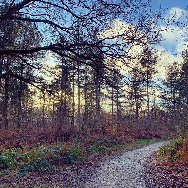 #Bend. #shropshire #countryside #ig_countryside #haughmondhill https://ift.tt/381wJw6pic.twitter.com/1v2U7N4KzE
