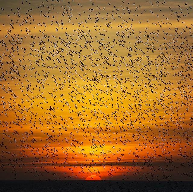 Starlings at Brighton Pier #brighton #thisisbrighton #igersbrighton #visitbrighton #lovebrighton #ilovebrighton #ig_nature_naturally #brightonpalacepier #brightonlife #visitbritain #lovegreatbritain #photosofbritain #lonelyplanet #birds #starlings #murmu… https://ift.tt/2QPyC9Ppic.twitter.com/apArzdNK4o