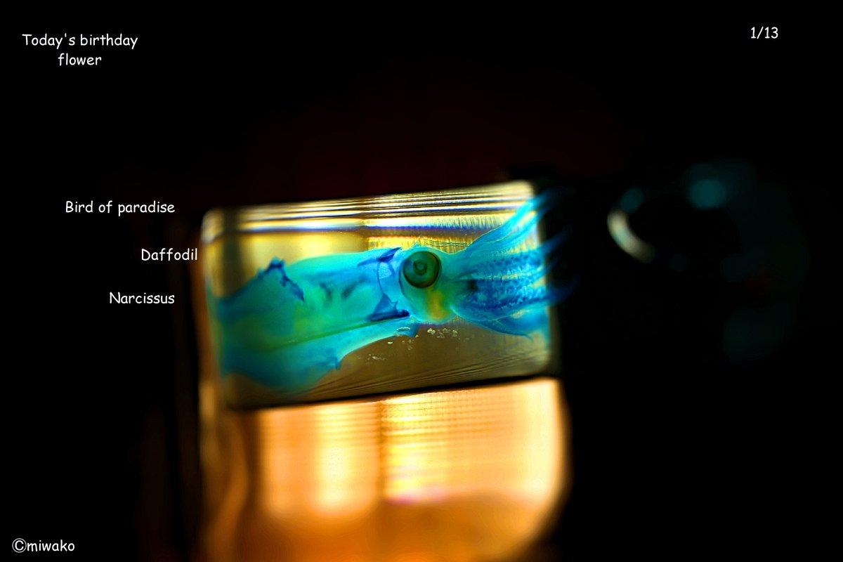 #水仙  #Narcissus #神秘 #喇叭水仙  #Daffodil #報われぬ恋 #ストレリチア #極楽鳥花 #Birdofparadise #気取った恋  #誕生花 #1月13日 #photo #birthday #おめでとう #Flower #和風月名 #1月 #睦月 #初春 #正月 #祝月 #霞染月 #暮新月 #月正 #上春 #孟春 #初陽 #青陽  Don't give up on the future