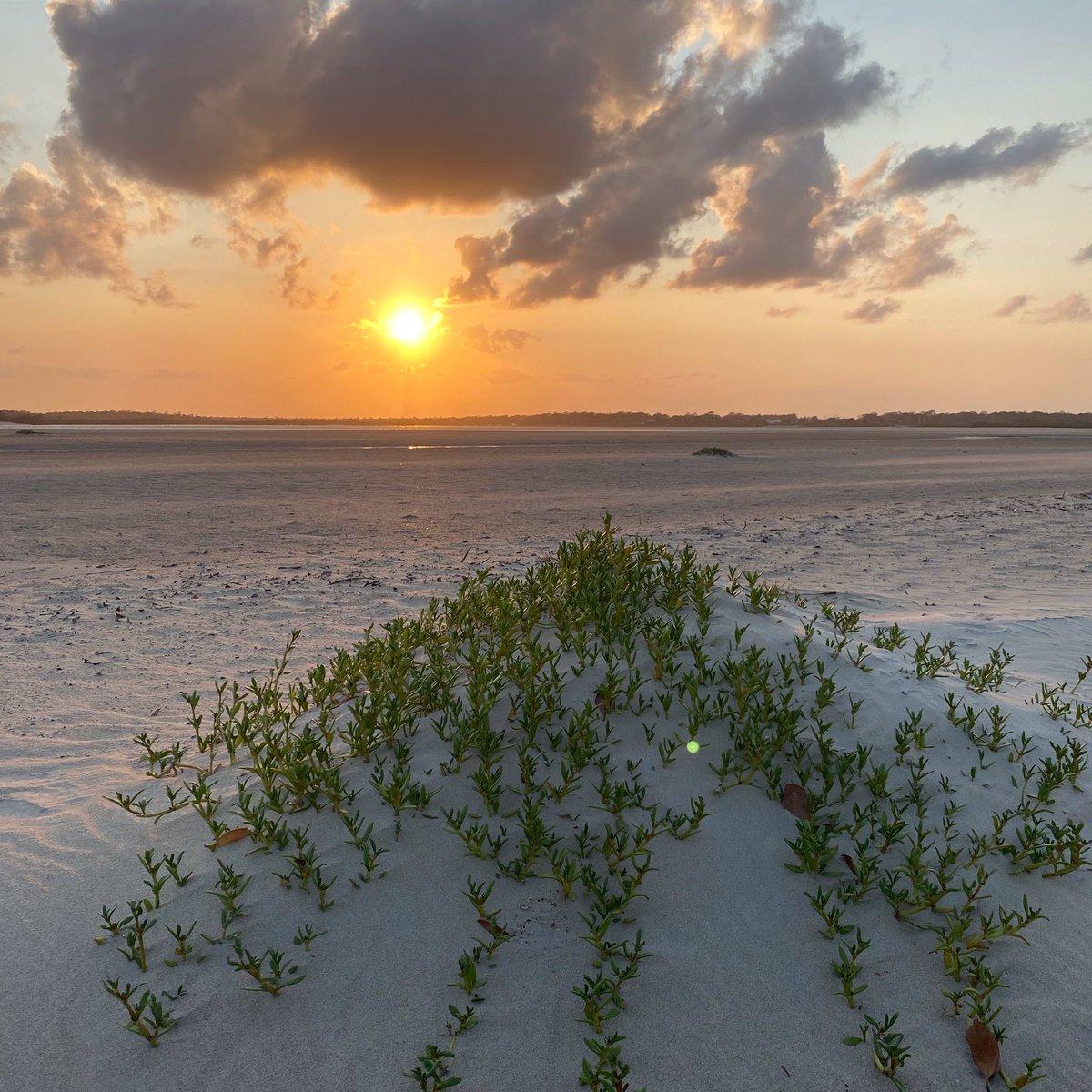 Sunset at Elliot Heads Beach. Photo by Cameron Robinson #InspireEvolve #InspireEvolve.com #Motivation #InspirationalQuotesAndSayings #InspirationalQuotes #inspirationalquotesaboutlife  http:// instagram.com/p/B7QceFvFuF-/    …<br>http://pic.twitter.com/CNFmCW6Hod