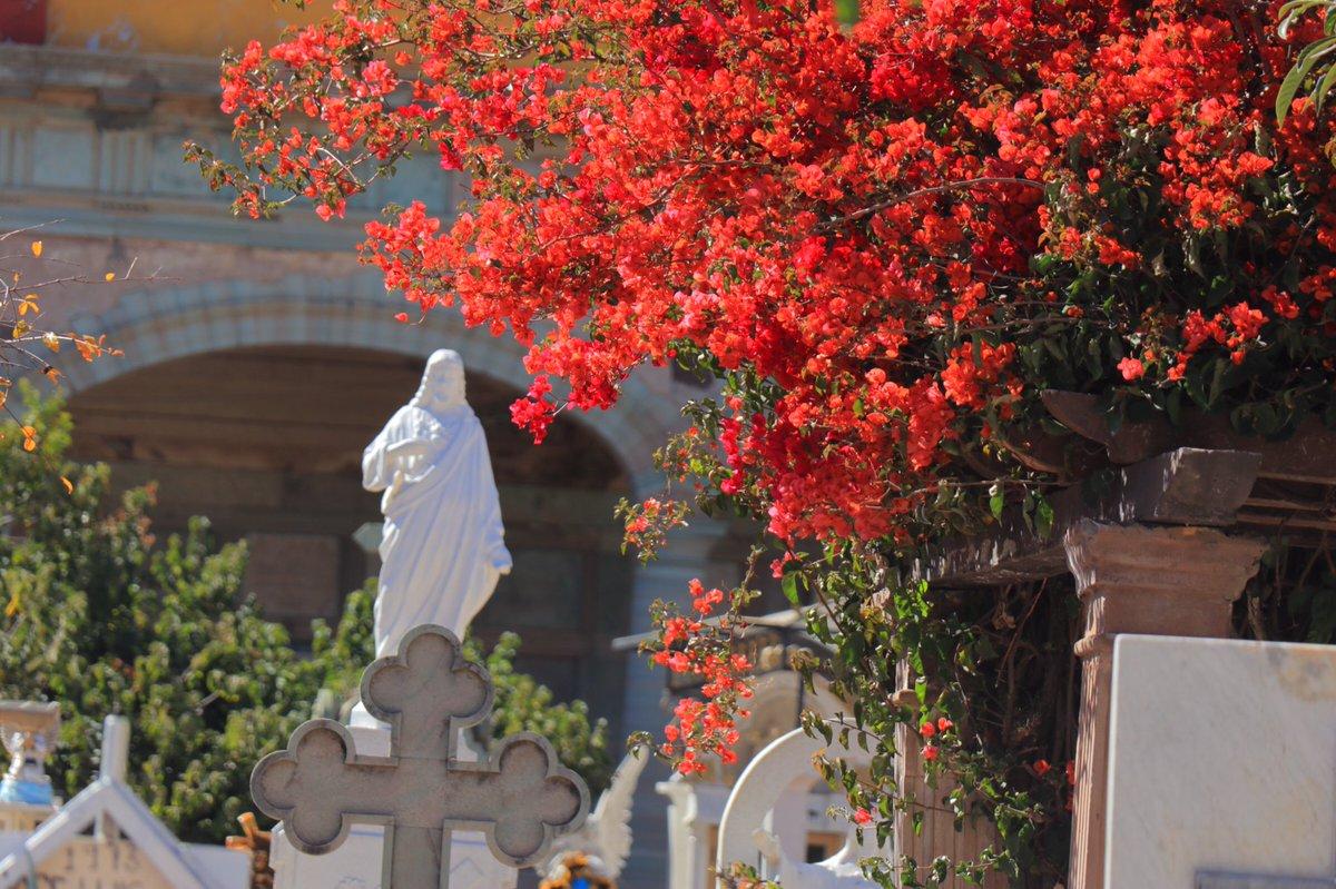 メキシコ のお墓永遠の花、を見て一度は訪れてみたいと思ったので行けて良かったですちなみに、グアナファトです