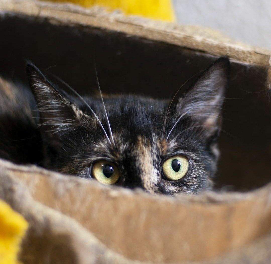 Catland - adoção de gatinhos on Twitter