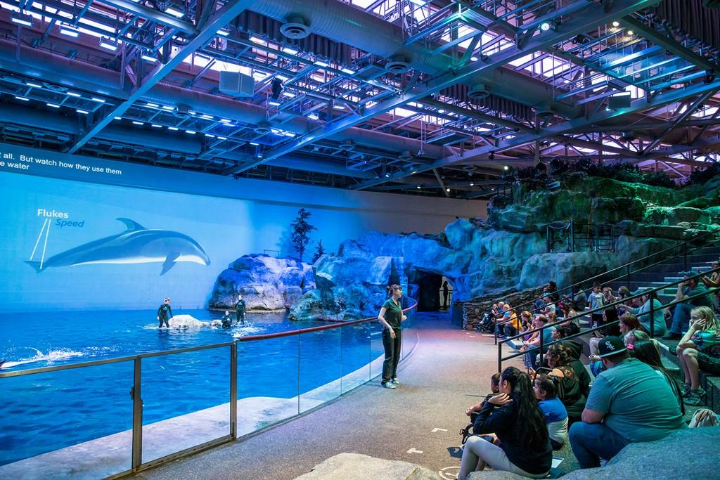 Shedd Aquarium Announces Free Days chicago.cbslocal.com/2020/01/13/she…