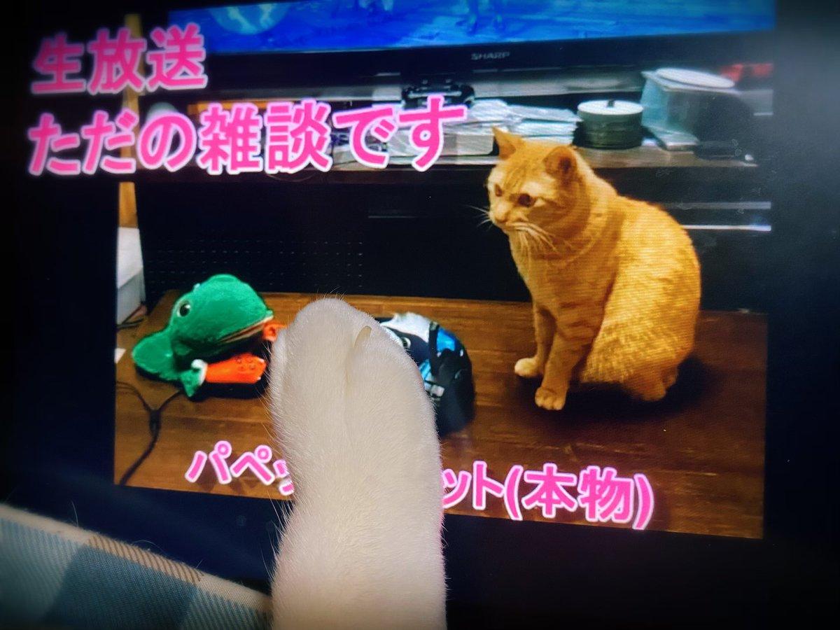 猫 甘えがひどい