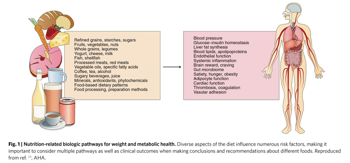 test Twitter Media - What are the right foods and food policy to address the #obesity and #diabetes #T2D global epidemic? An in-depth review by @Dmozaffarian @TuftsNutrition  @NatureFoodJnl  https://t.co/9mOOOQak7h (Those into the #ketogenic #diet will not agree w/ some of the recommendations) #keto https://t.co/idM4OPWkeE