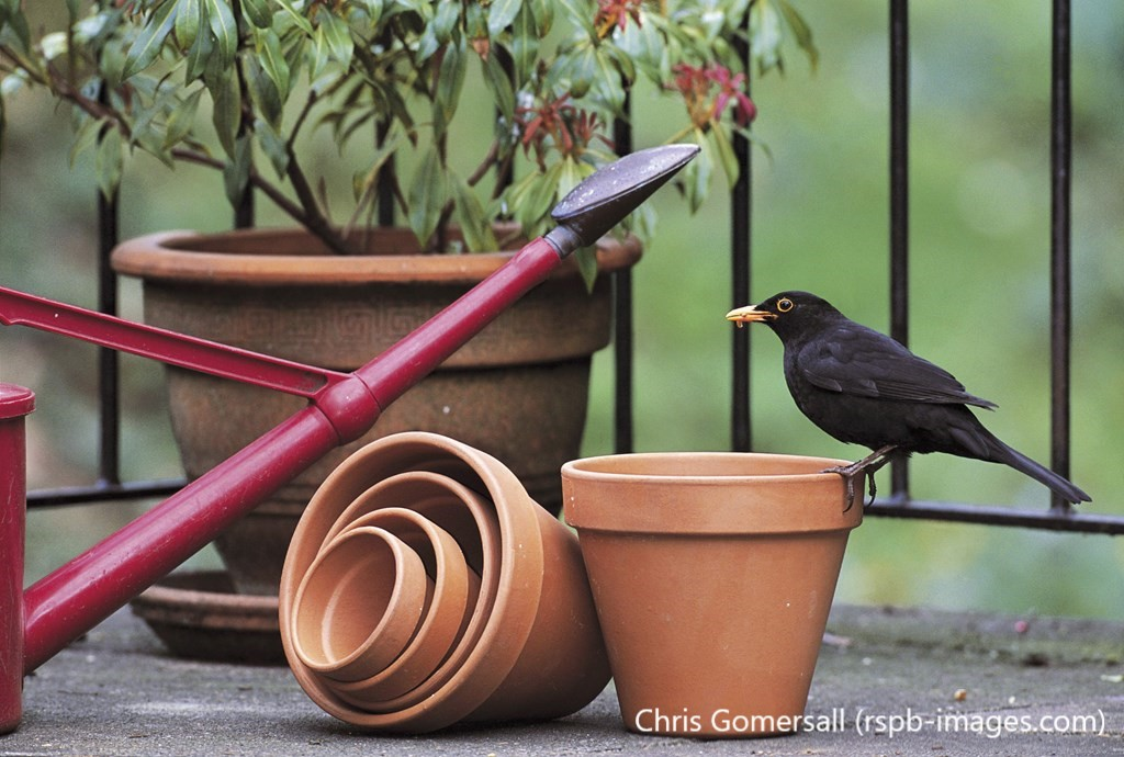 If you're independent and prefer to keep yourself to yourself, you might be a blackbird! Find out which garden bird you're most like with our quiz!   http:// natu.re/Wnczbn     <br>http://pic.twitter.com/fl2b9v0RpA