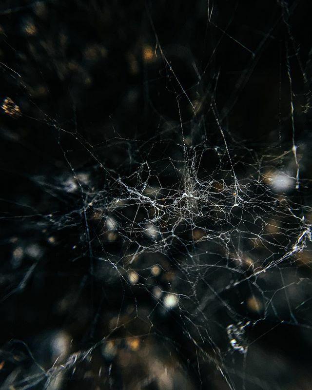#the_gallery_of_magic #macro_textures #macro_drama #fiftyshades_of_macro #m3xtures #lenslove_textures #allkindsofmagic #allkindsofnature #ig_nature_naturally #moody_arts #picoftheday #macro #bokeh #moody #dark #macronature #photooftheday #spider #spiderw… https://ift.tt/2QOie9cpic.twitter.com/GLHOtV1MnI