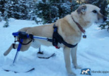 Winter is here! Get your pet mobile with a Walkin Wheels Wheel chair with the ski attachment! #winterpets #walkinwheels #handicappedpets pic.twitter.com/6tFMj6xxb9