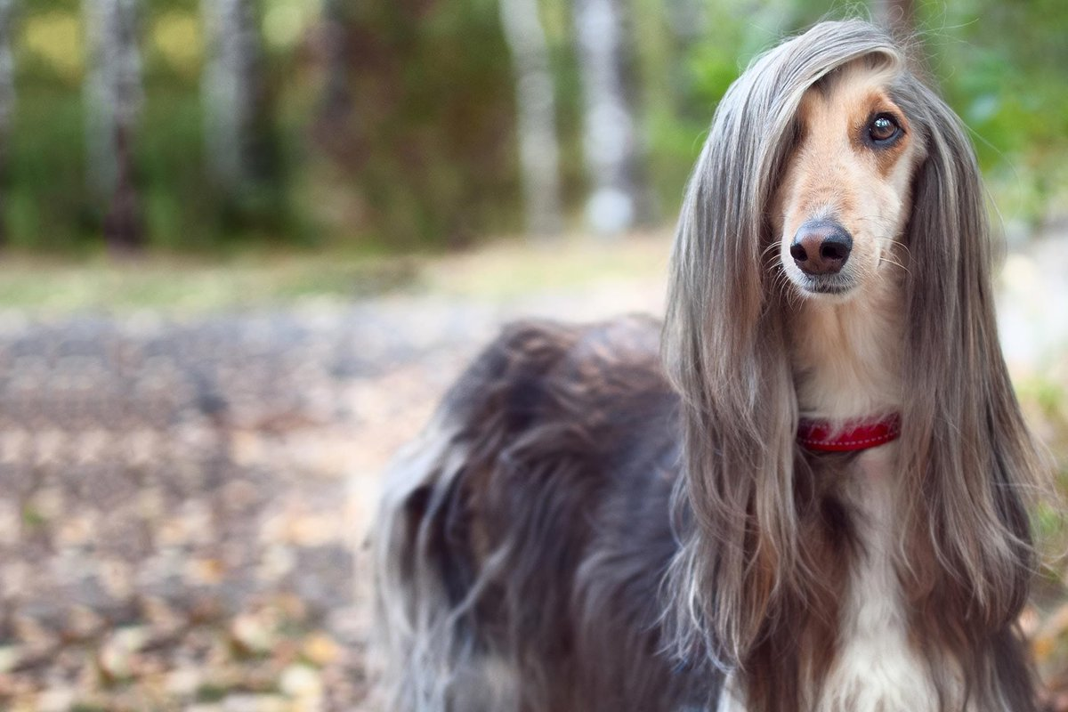This dog looks like Trevor Lawrence