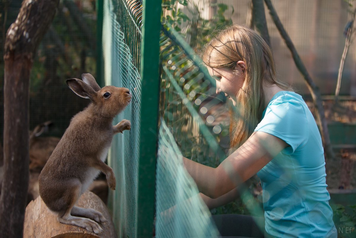 зайчики в неволе фото легко содержать, лисица