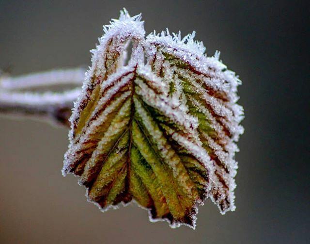vous présente son coup de  du jour, «à la faveur de l'hiver»  .  : @l_instantpresent merci pour cette photo ! .  Partagez vous aussi vos #photos du #gers avec #igersauch et #igersgers .  Sélectionnée par @alexandra.blc . Team @igersauch :… https://ift.tt/3aaytVIpic.twitter.com/T2dP5K5Q4C