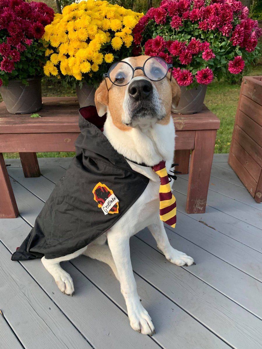 It's #NationalDressUpYourPetDay and because we know you've saved every adorable pet pic you've ever taken on your phone please share them with the hashtag #MyMorning<br>http://pic.twitter.com/KvxZSq4njF