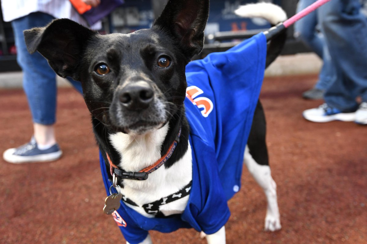 It's #NationalDressUpYourPetDay! Let's see all the #MetsPets out there…  We'll share some of our favorites! <br>http://pic.twitter.com/FxQsAHKT9w