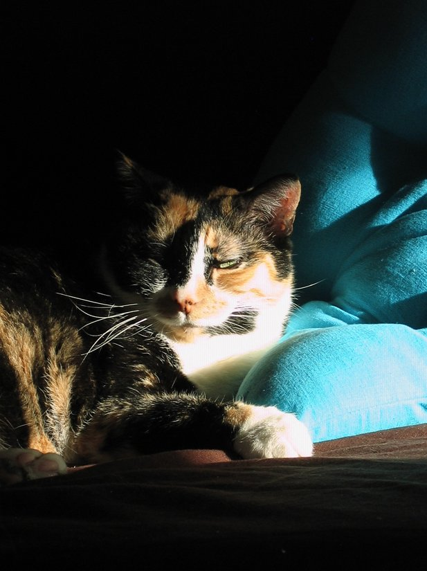 #ShouldHaveBeenNominatedFor Most Outstanding Calico on a Blue Pillow... totally robbed. <br>http://pic.twitter.com/PZGW7pcTkQ