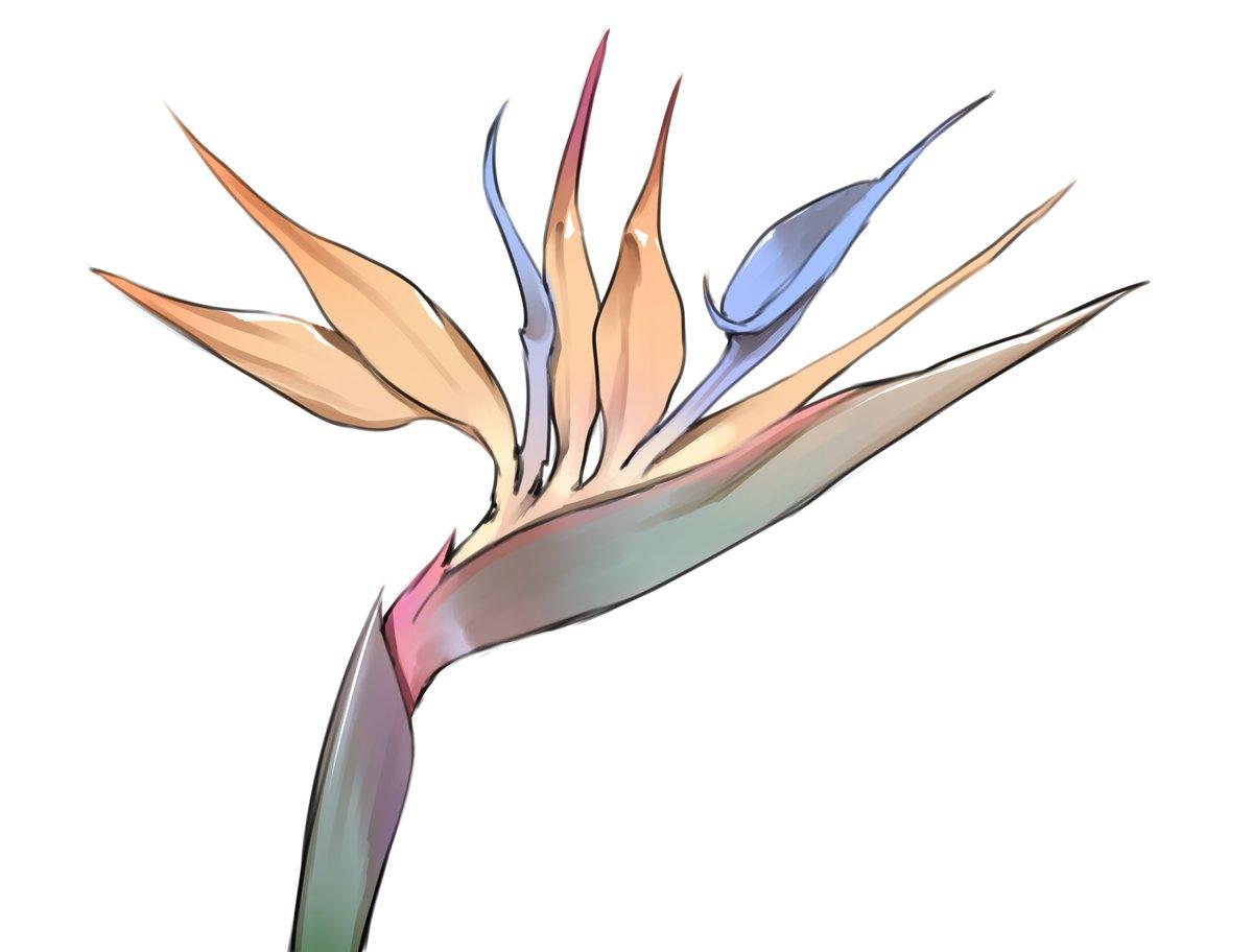 1日1絵、93日目! 今日はゴクラクチョウカです。  はぁ~綺麗~ずっと見てられる~~☺️  #1日1絵 #絵描きさんと繋がりたい #極楽鳥花