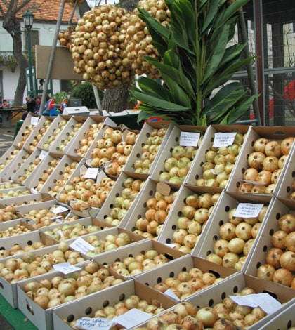 Madeira Holidays on Twitter: May 16, 17, 18  Dedicated to the onion, Festa da Cebola is a charming tribute to local farmers and the agriculture produced in Caniço.  #festival #Island #Islands #Madeira #MadeiraOnionFestival #new