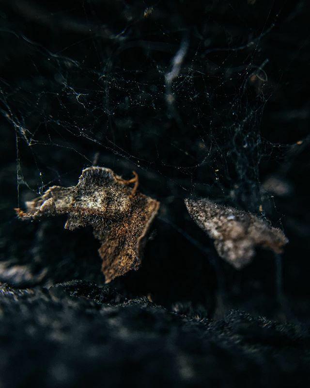 #the_gallery_of_magic #macro_textures #macro_drama #fiftyshades_of_macro #m3xtures #lenslove_textures #allkindsofmagic #allkindsofnature #ig_nature_naturally #moody_arts #picoftheday #macro #bokeh #moody #dark #macronature #photooftheday #spider #spiderw… https://ift.tt/30la9vTpic.twitter.com/qo7nR7FDoG
