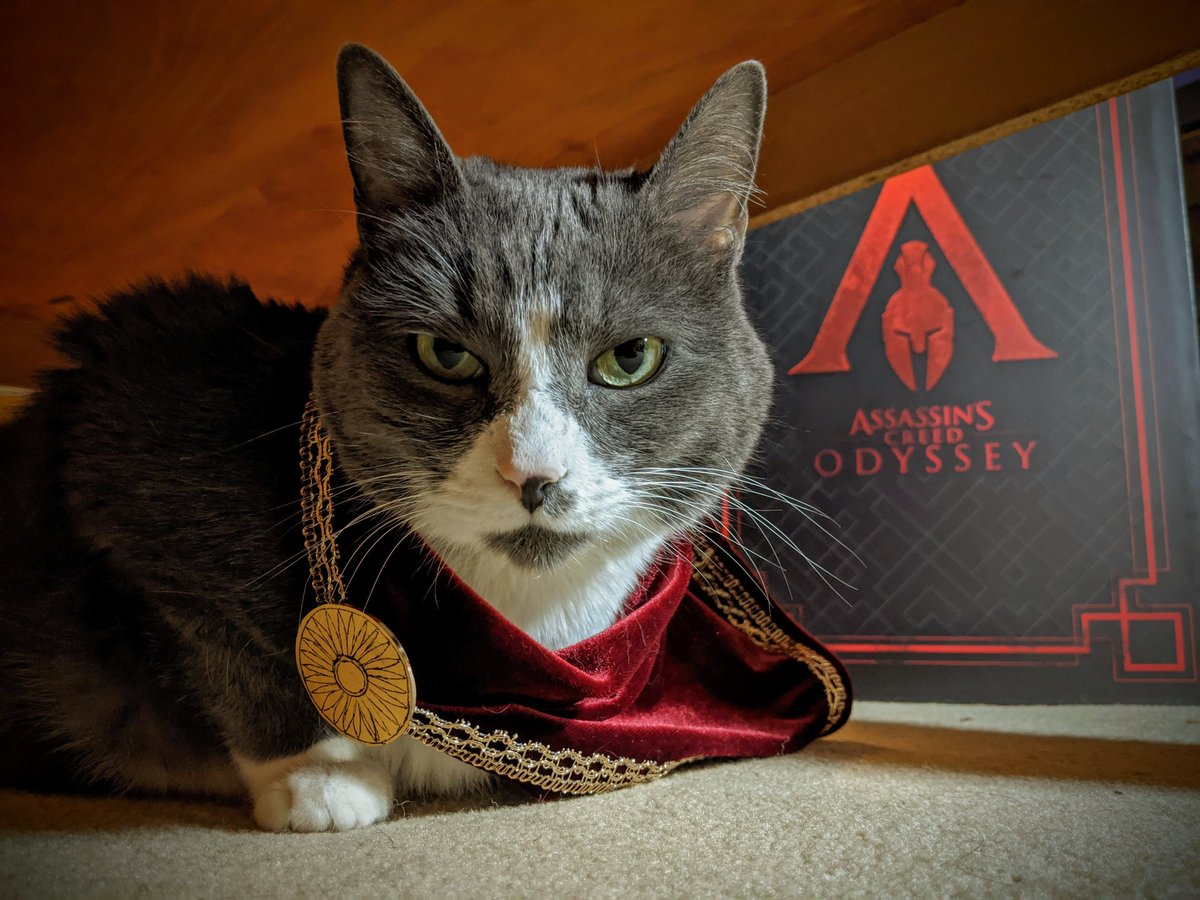 It's #NationalDressUpYourPetDay and there's never been a better time to re-share Molly the cat's Kassandra pawsplay. Show us your furry friends in their best outfits below.    Credit : @Lorie_O<br>http://pic.twitter.com/kWSVLFrLOA