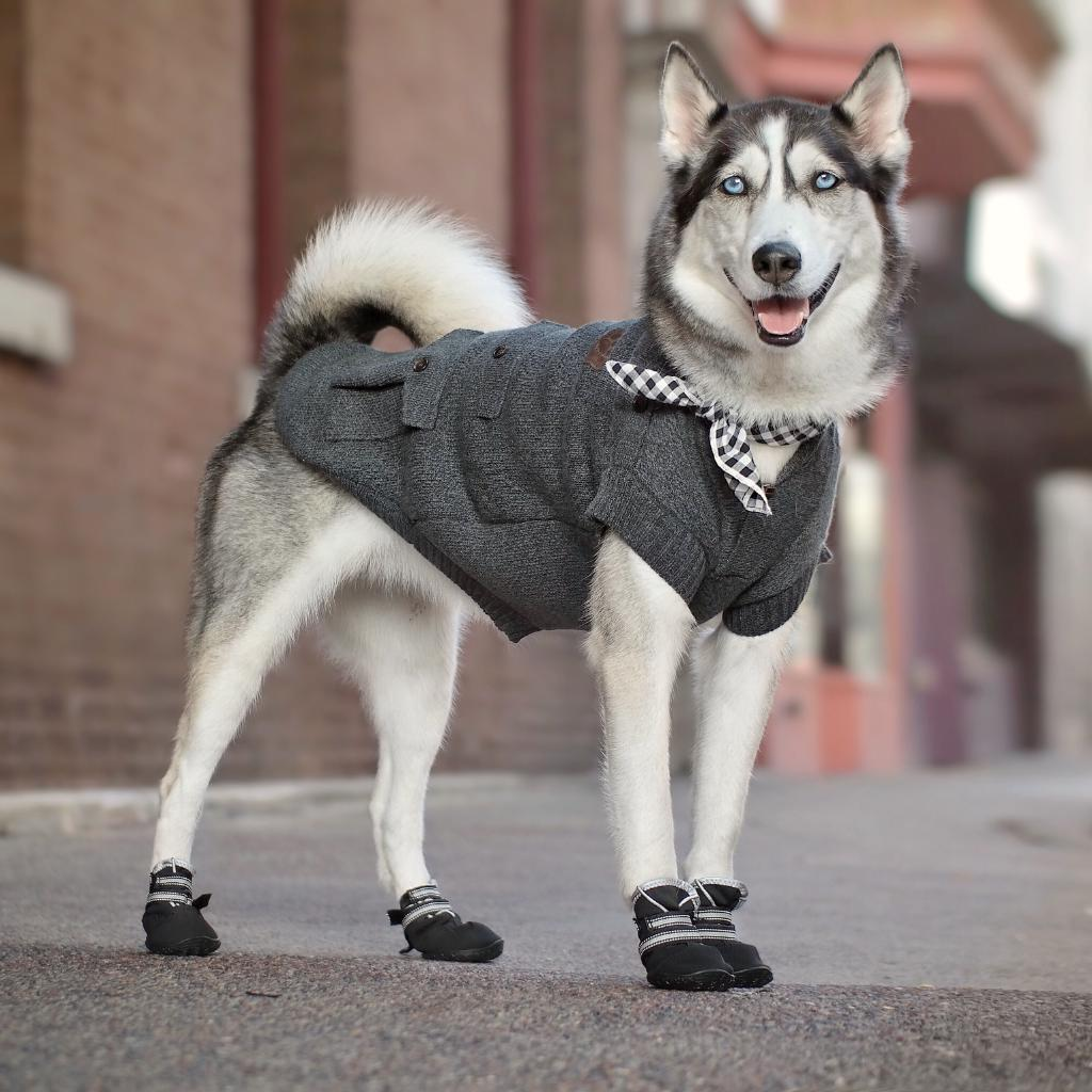 Like we need an excuse.  #NationalDressUpYourPetDay.   Shop influencer curated looks:  http:// ms.spr.ly/6012Tku0C    <br>http://pic.twitter.com/NG9SrIp3Ho