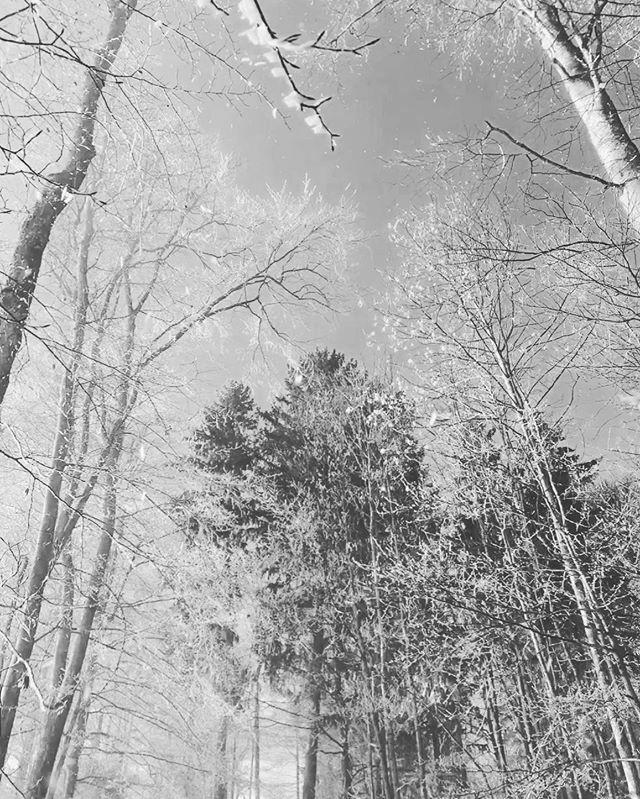 Winter #sw #winter #snow #black #white #ice #kalt #eis #nature #cold #beautiful #landscape #winterwonderland #frost #natur #schnee #frozen #naturfotografie #kaltejahreszeit #arschkalt https://ift.tt/3abXFeApic.twitter.com/FhTh1HdDWT