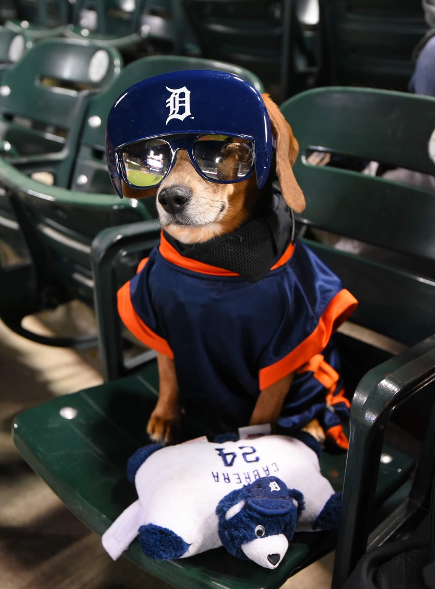 Fashion icons.    #NationalDressUpYourPetDay <br>http://pic.twitter.com/j426PEfE4F