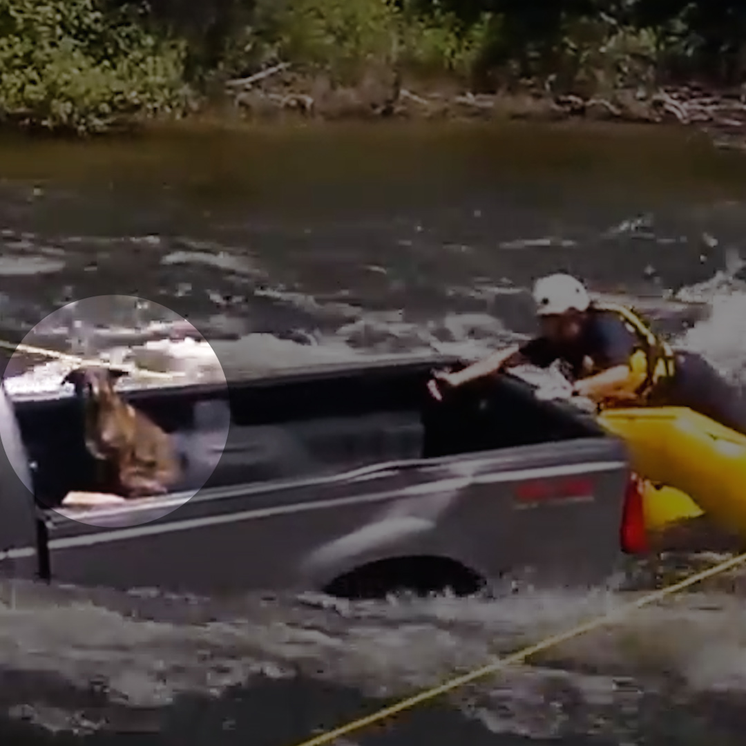 Very intense dog rescue 😱