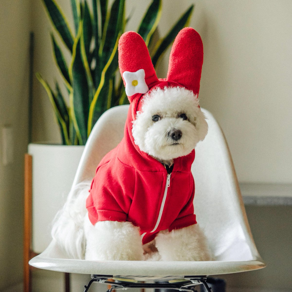 The sweetest way to celebrate #NationalDressUpYourPetDay #MyMelody   : bowiethebichon on Instagram.<br>http://pic.twitter.com/LUwrSqRXpS