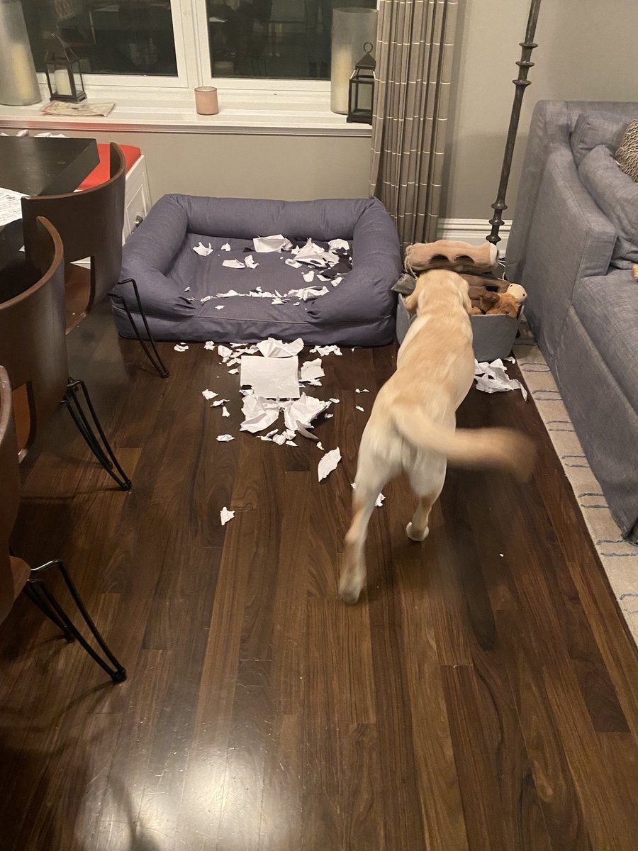 When your puppy and your son's paper airplane obsession collide.