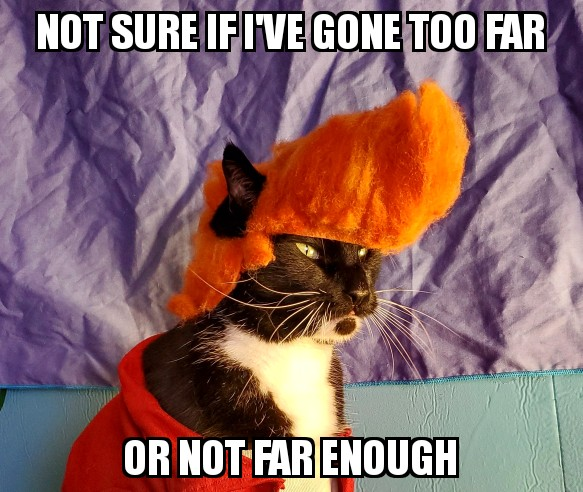 Whenever I go big on posting with a daily # that fits our account.  #NationalDressUpYourPetDay <br>http://pic.twitter.com/onCvP2Tz1i
