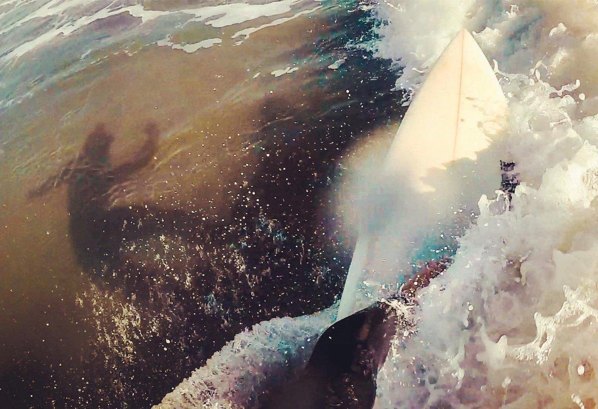 何かしら私にもやれる事はあるはず どんなに小いさな波であろうとも There must be something I can do No matter how small the waves #できる #doit #dontthink #1173 #go #surf #weekendsurfer #isafilm #youtube  #1173isao #photography #sea #海 #日本 #gopro #goprooftheday #goprophotographypic.twitter.com/7ZEpTBwrLG