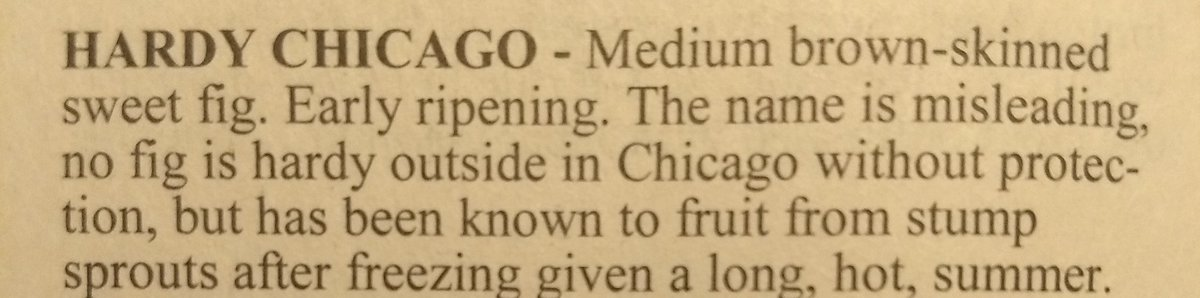 'no fig is hardy in Chicago' bwahaha