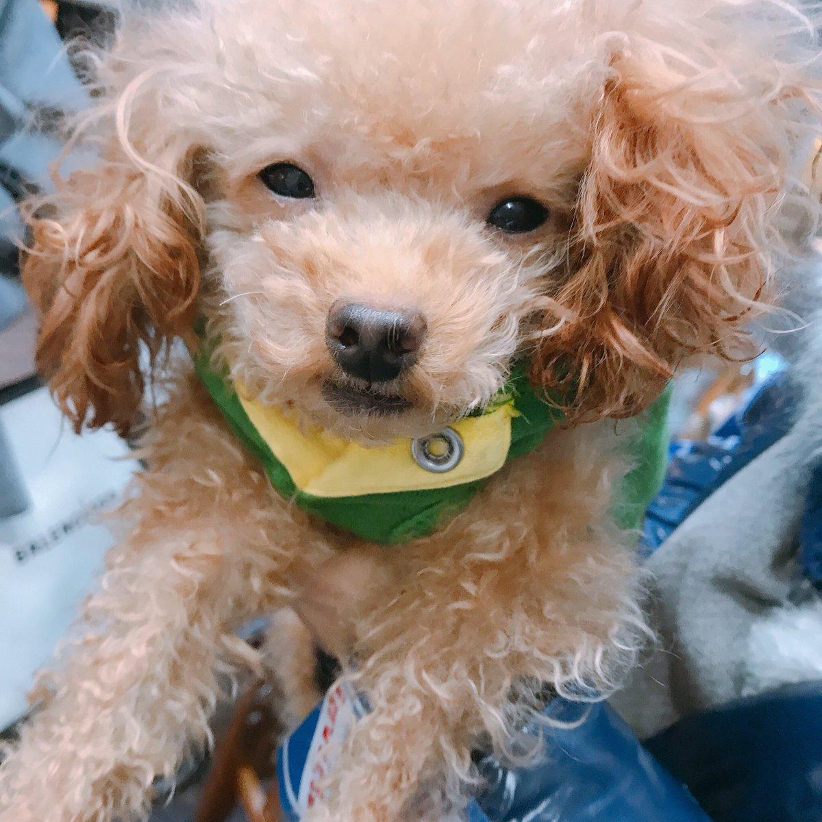 今日の19時まで、広尾プラザのケンタッキー前で、チャリティーバザーやってます!私も昨日行きました! 可愛い保護犬ちゃんに会えますよ! 売り上げは、みんなの医療代などに使われます。障害を抱えてるコ達の、大切な命を救うお手伝いをしてい… https://t.co/lrBgKNhnTZ