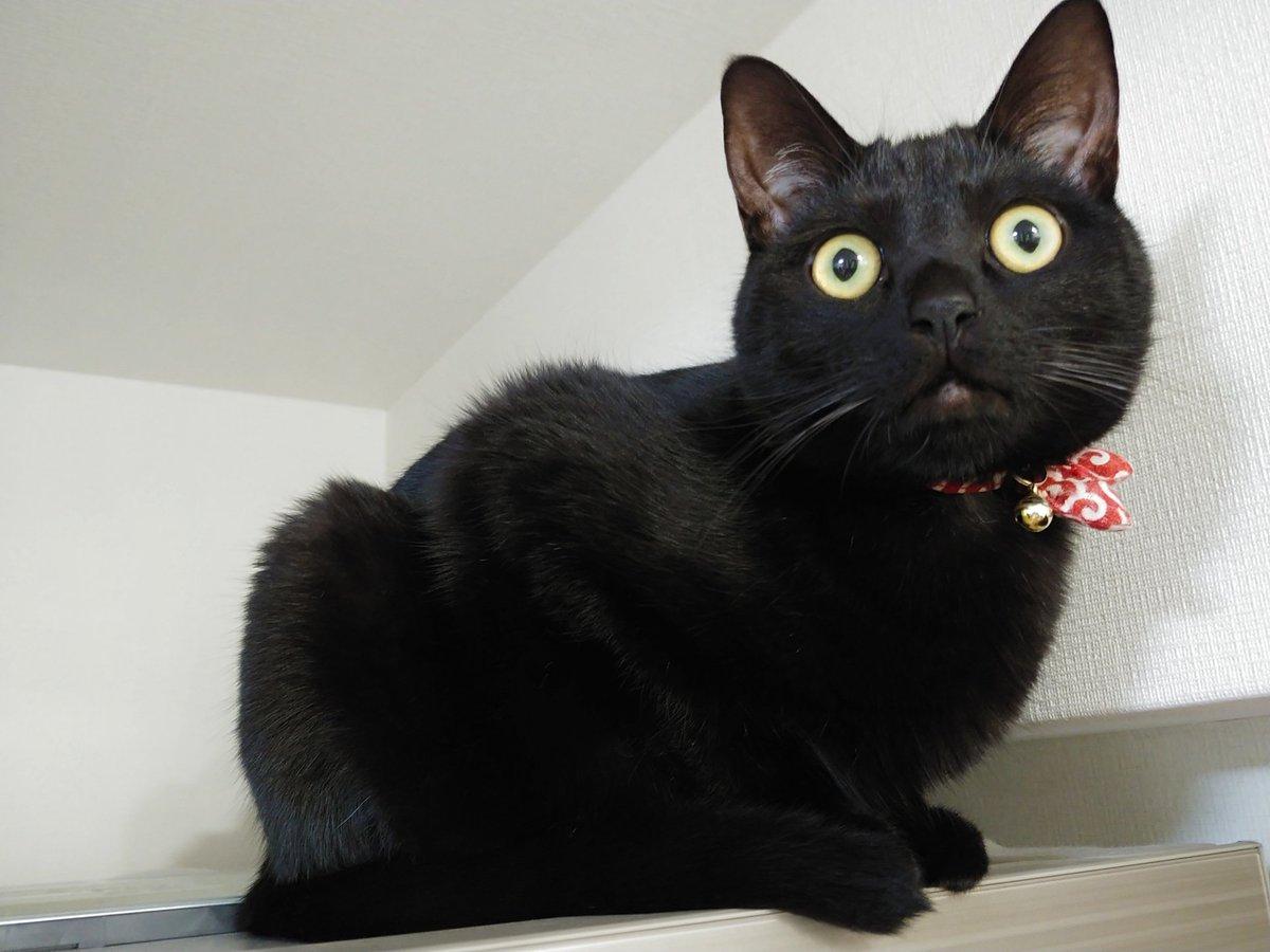 637日目。皿を洗っていたら、足元近くに黒猫が座っているのが視界の端にうつった。ずっと居るので、皿洗い終盤「いつまで経っても甘えん坊だなぁ」と思い手を拭いて撫でようと思って見たら、黒いゴミ箱だった(置き場所変えた)。黒猫は冷蔵庫の上にいた。最近黒い物が全部黒猫に見えてしまう。