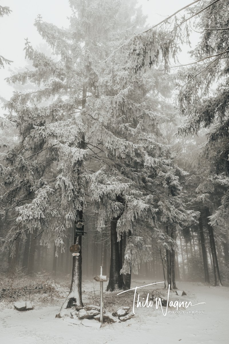Winter im Bayerischen Wald #landscapephotography #foto #landscapes #fotografieren #nature #naturephotography #photooftheday #photo #fotograf #landschaftsfotografie #hobbyfotografie #landscape_photography #photographer #natur #naturephoto #landschaft #naturfotografie pic.twitter.com/O9S2Tq7ZJj