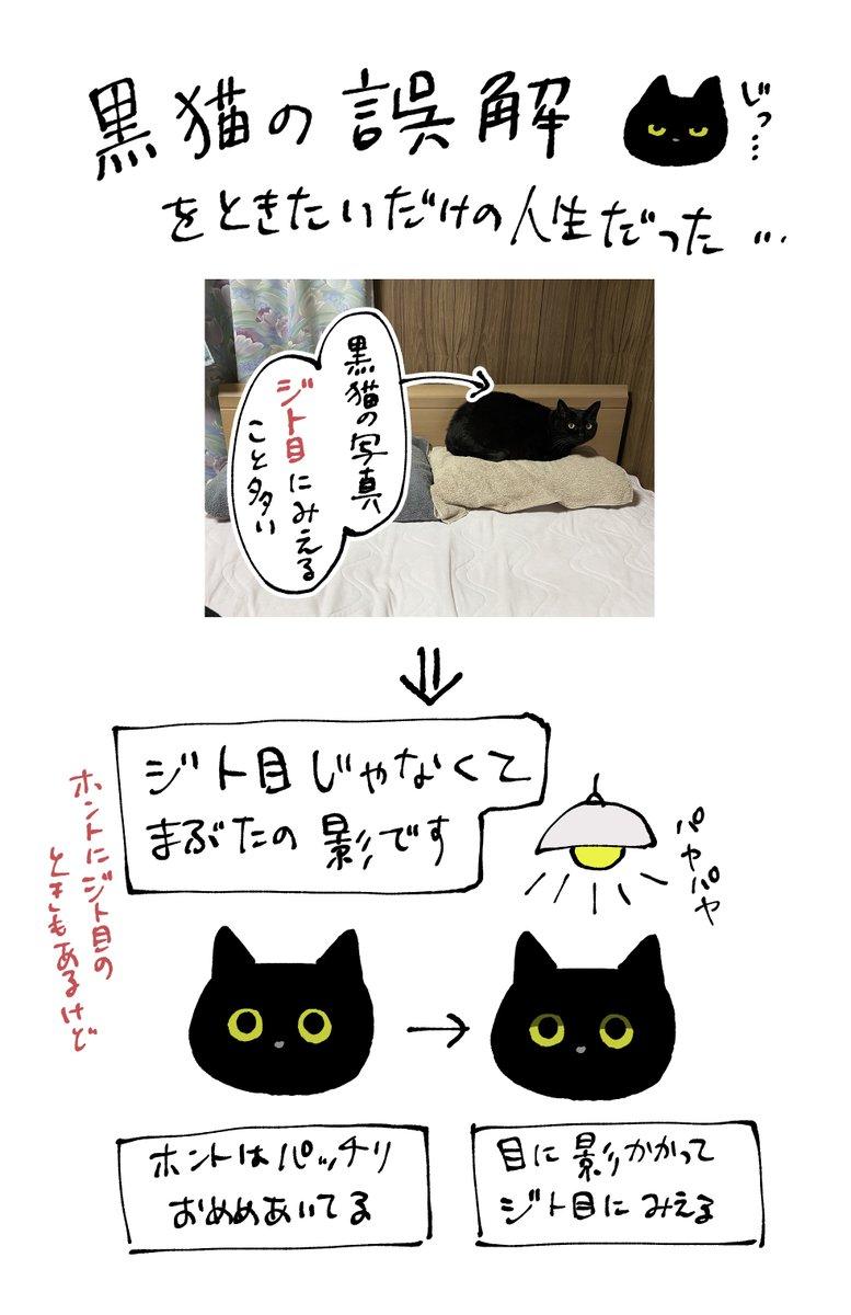 黒猫の写真うまく撮れなくて言い訳じみた解説を書く夜黒猫の写真みるときは顔の部分を拡大してみるとまた違った表情が見えてくる(かもしれない)