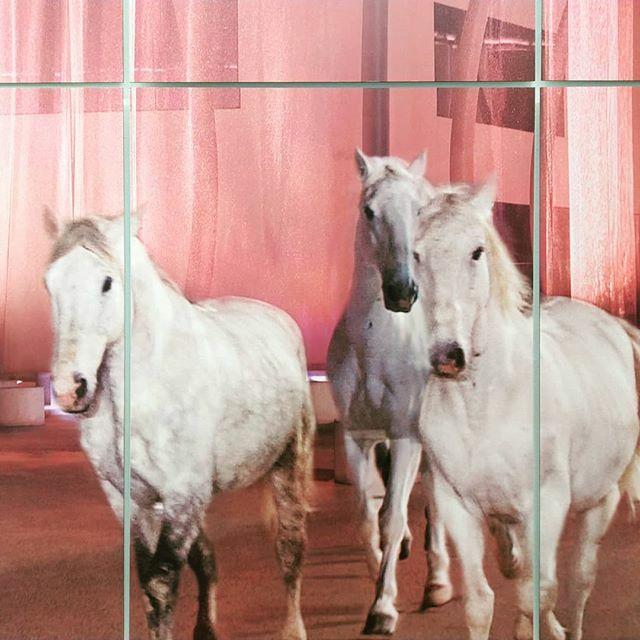Heute Morgen in der Raumgalerie. #paradiseforeveryone #pferdeschönheiten #dieraumgalerie #reginadahmeningenhoven #pferd #architektur #architekturgaleriestuttgart #nichtverpassen https://ift.tt/2tnhsHxpic.twitter.com/UexJkeNqDh