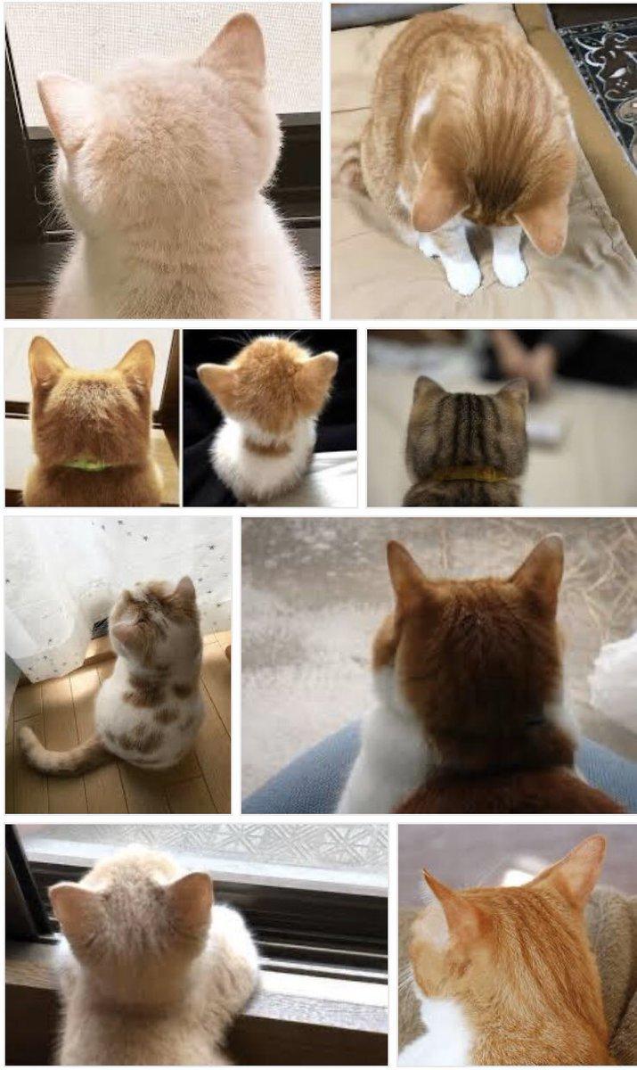 「猫 後頭部」で検索するだけで世界一幸せになれる