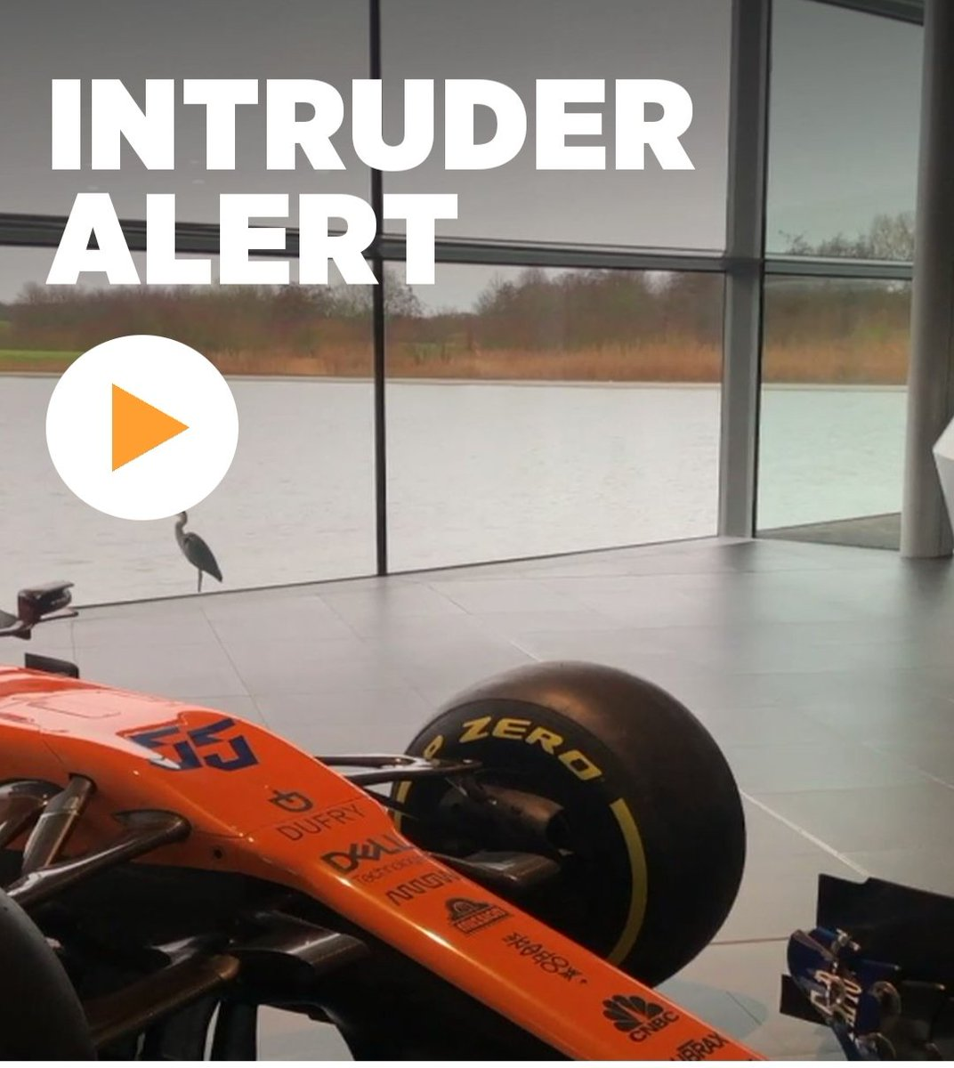 Even the local wildlife is after a peek at the #MCL35 👀🐦  Full video 📱➡️ https://t.co/Eer6PWx3Tg #McLarenApp