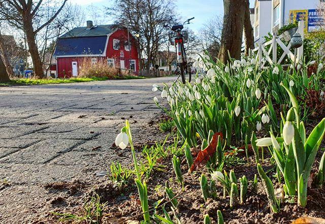 Kleine Frühlingsboten in Vitte #hiddensee #inselliebe #schneeglöckchen #instanature #naturfotografie #blütenzauber #instablossom #natureinstagram #hiddenseeforum #wirsindinsel #snowdrops http://bit.ly/2TmfLVrpic.twitter.com/K4Nk9fuPYA