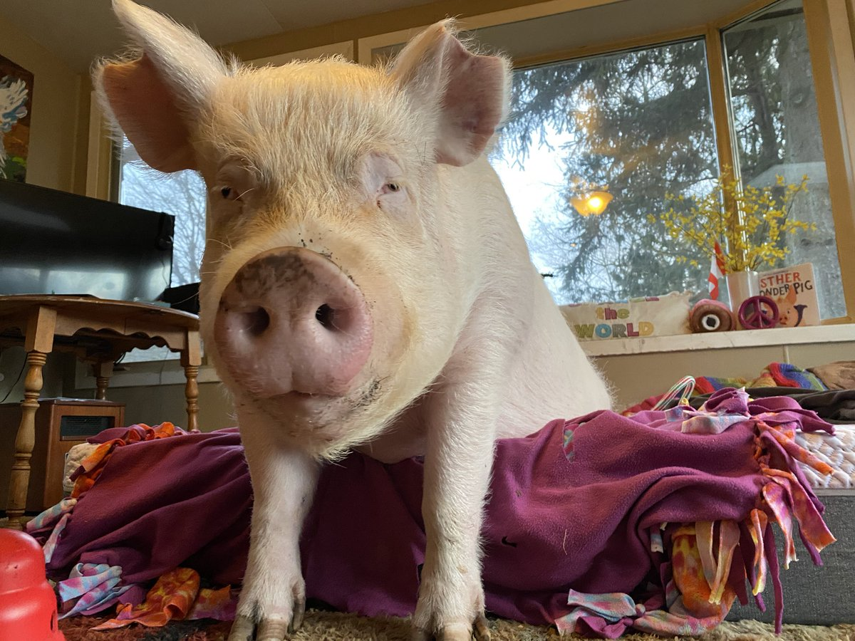 I just wanna take naps, eat cupcakes, and save animals. #MyPerfectDay #BeKindToAllKinds pic.twitter.com/KBB8SmshKP