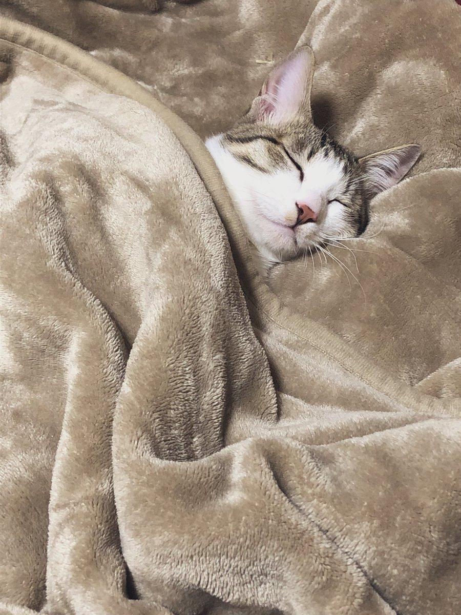 頭痛いからちょっと横になろ…てごろごろしてたら毛布に入ってきてカイヌシより早く寝た世界一かわゆいネコチャンです