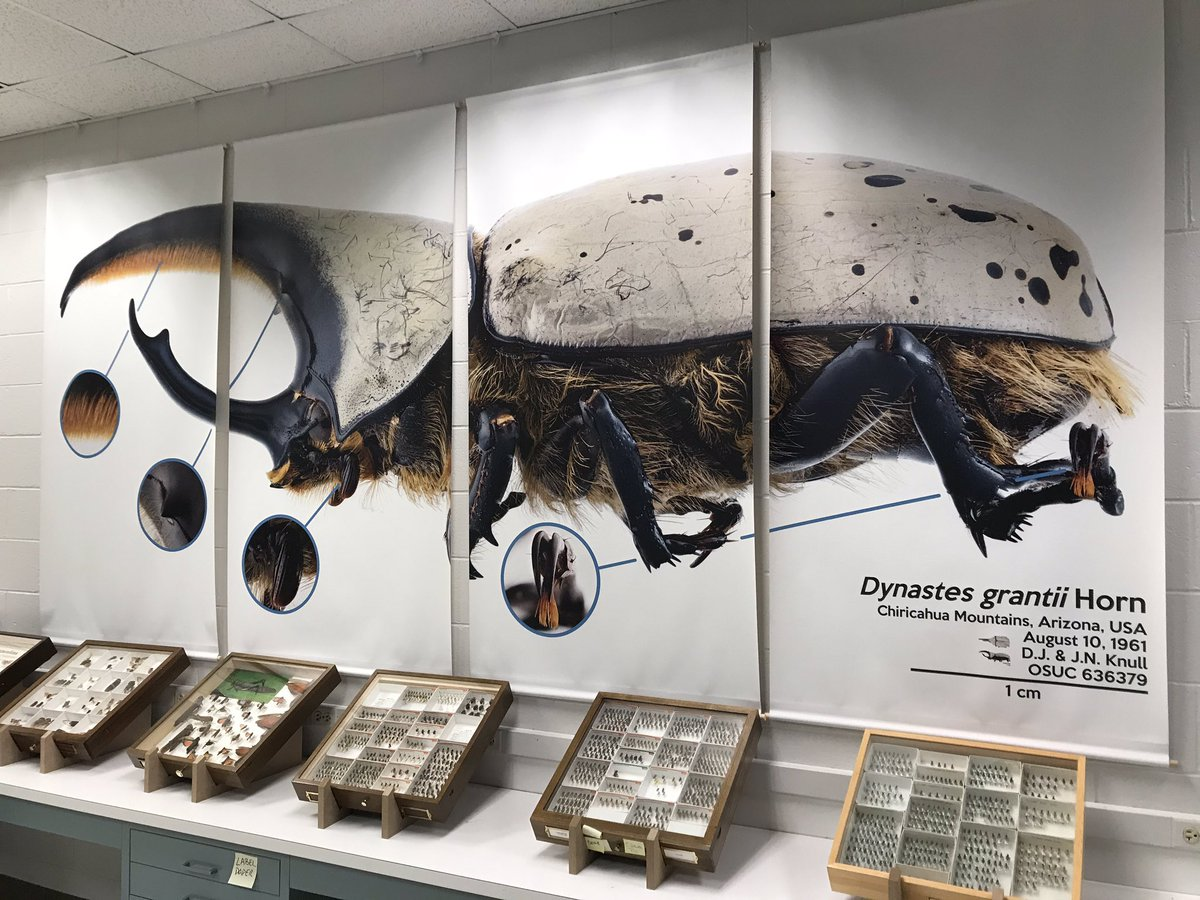 RT @Karl_Roeder: Super cool insect collection at Ohio State! https://t.co/TiFgjzDOh2