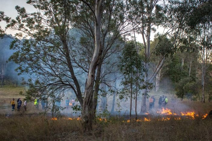 Cultural Burning is a term used to describe burning practices developed by Indigenous Australians to enhance the health of the land. ⠀⠀  📸: Jennifer Ingall