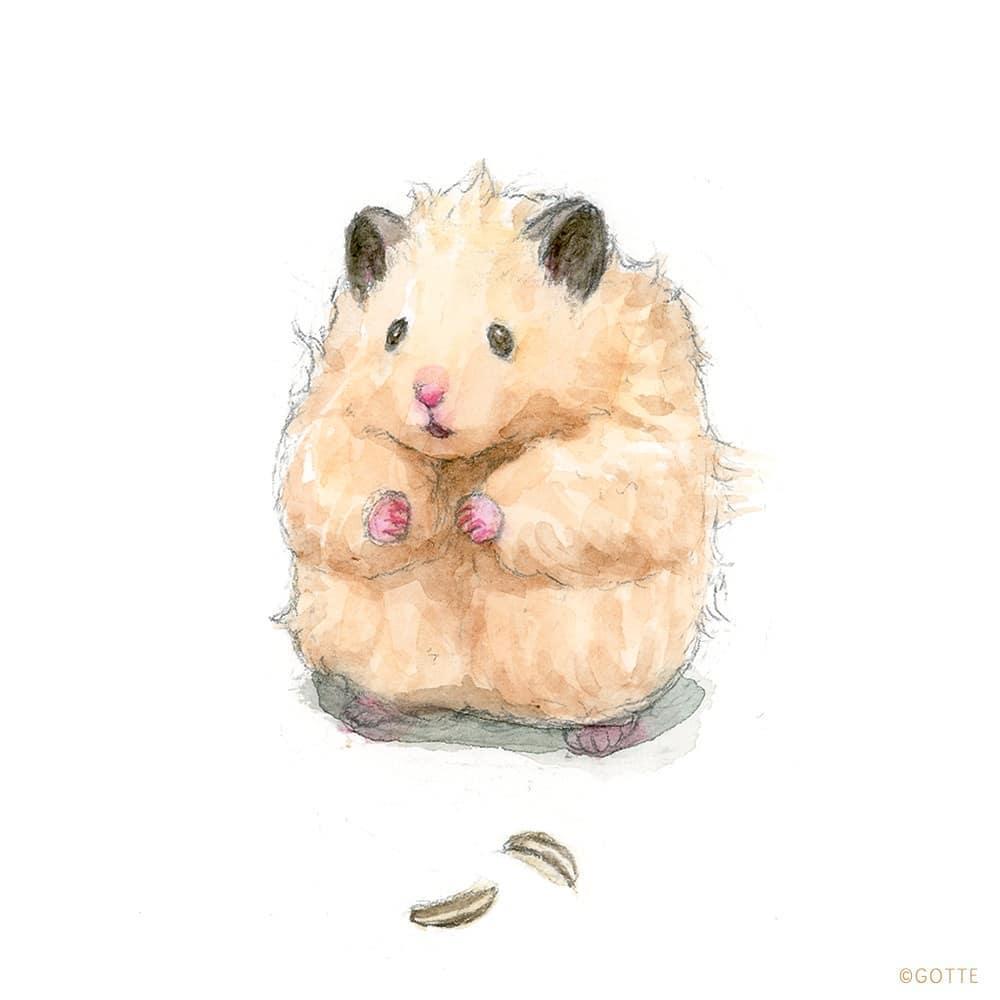 рисунки хомячок с печенькой вообще его журнале