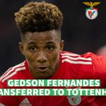 Image for the Tweet beginning: #GedsonFernandes , has been on