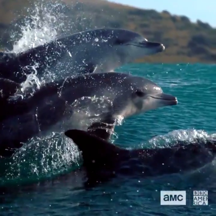 This Saturday, @BBCAmerica and @AMC_TV launch their new show, #SevenWorldsOnePlanet. It's a great opportunity to see how beautiful Australia is.