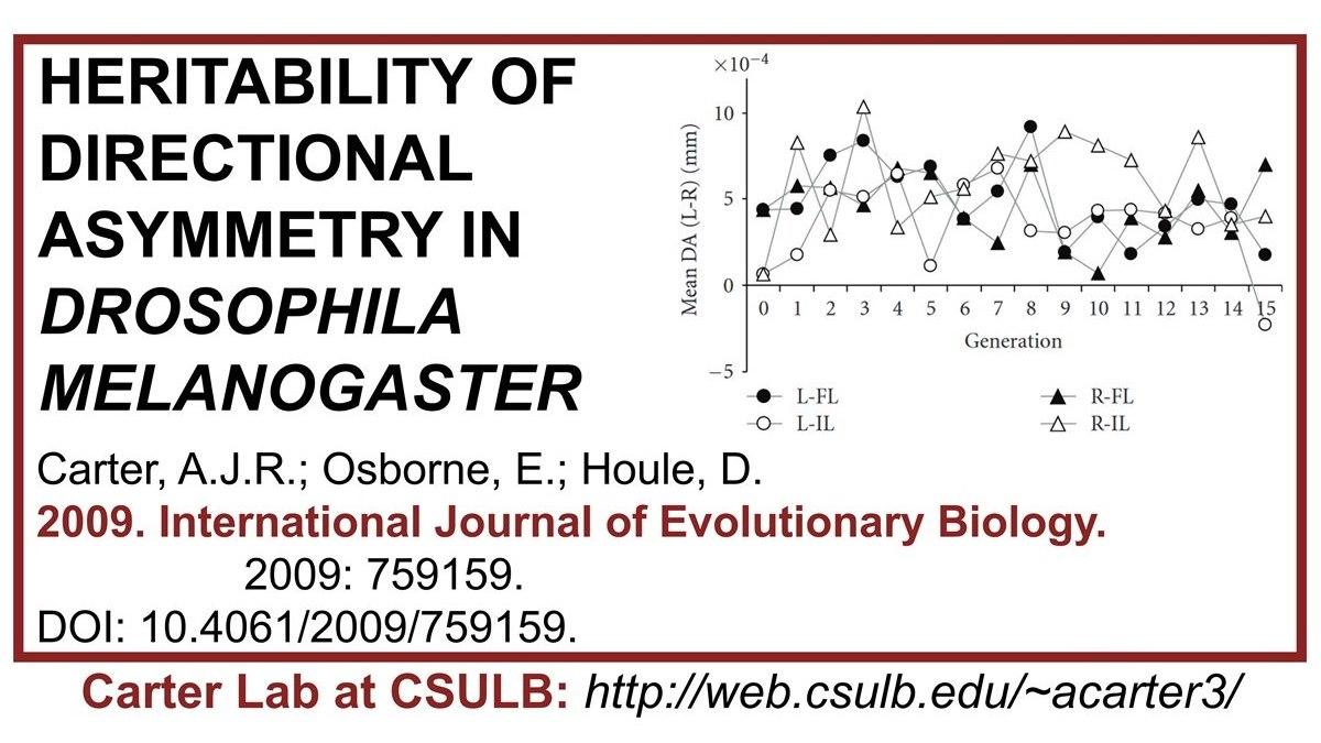 Carter Lab publication: Heritability of directional asymmetry in Drosophila melanogaster. Spoiler: DA unchanged by 15 generations of selection :)  #Carterlab #DA #directionalasymmetry #evolution #drosophila #evolvability #artificialselection #heritability