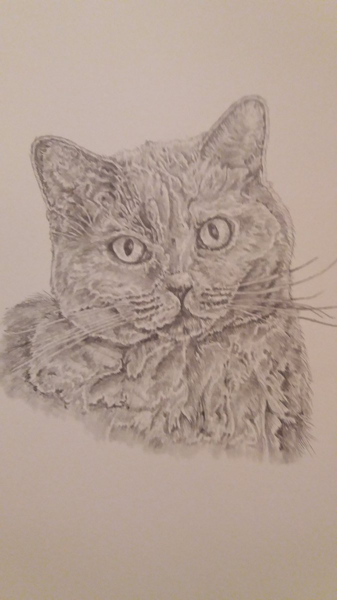 Hi everyone. I think I'm nearly finished this beautiful cat drawing.  A few bits and bobs to do but I'm very pleased with the result #petportrait @HandmadeHour #drawing #cats #pencil #pencilartpic.twitter.com/FTXi5SVWge